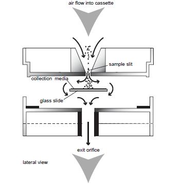 spore-trap-cross-section-view