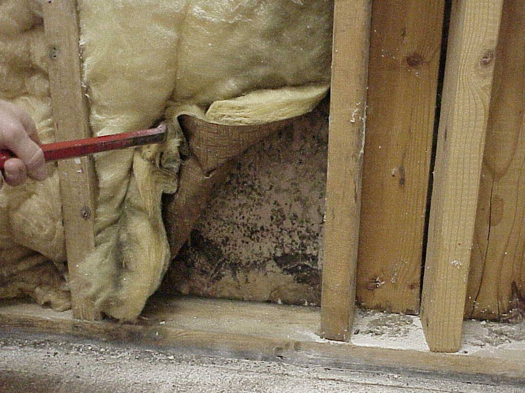To Test Or Not To Test For Mold Healthy Indoors